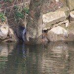île aux castors mars 2011 (5)